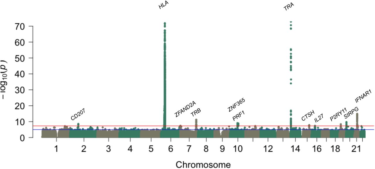 Narcolepsy risk loci are enriched in immune cells and suggest