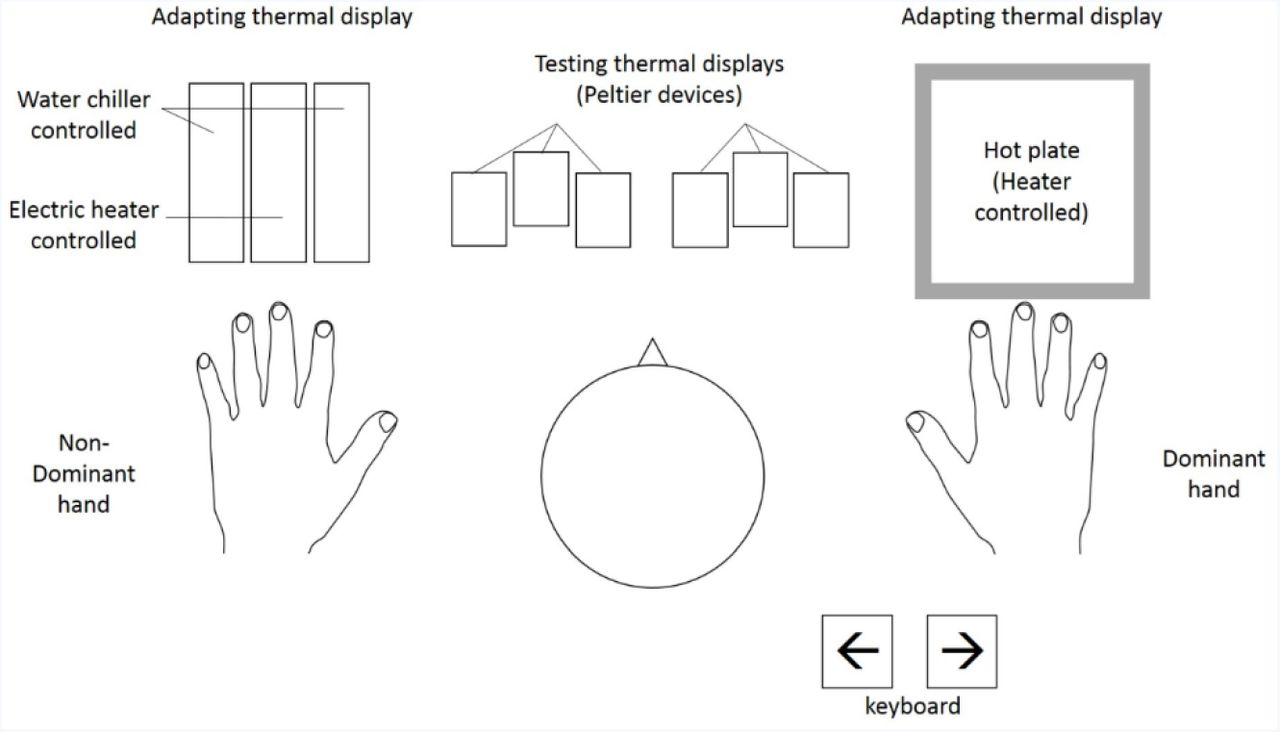 A Sensory Processing Hierarchy for Thermal Touch: Thermal ... on