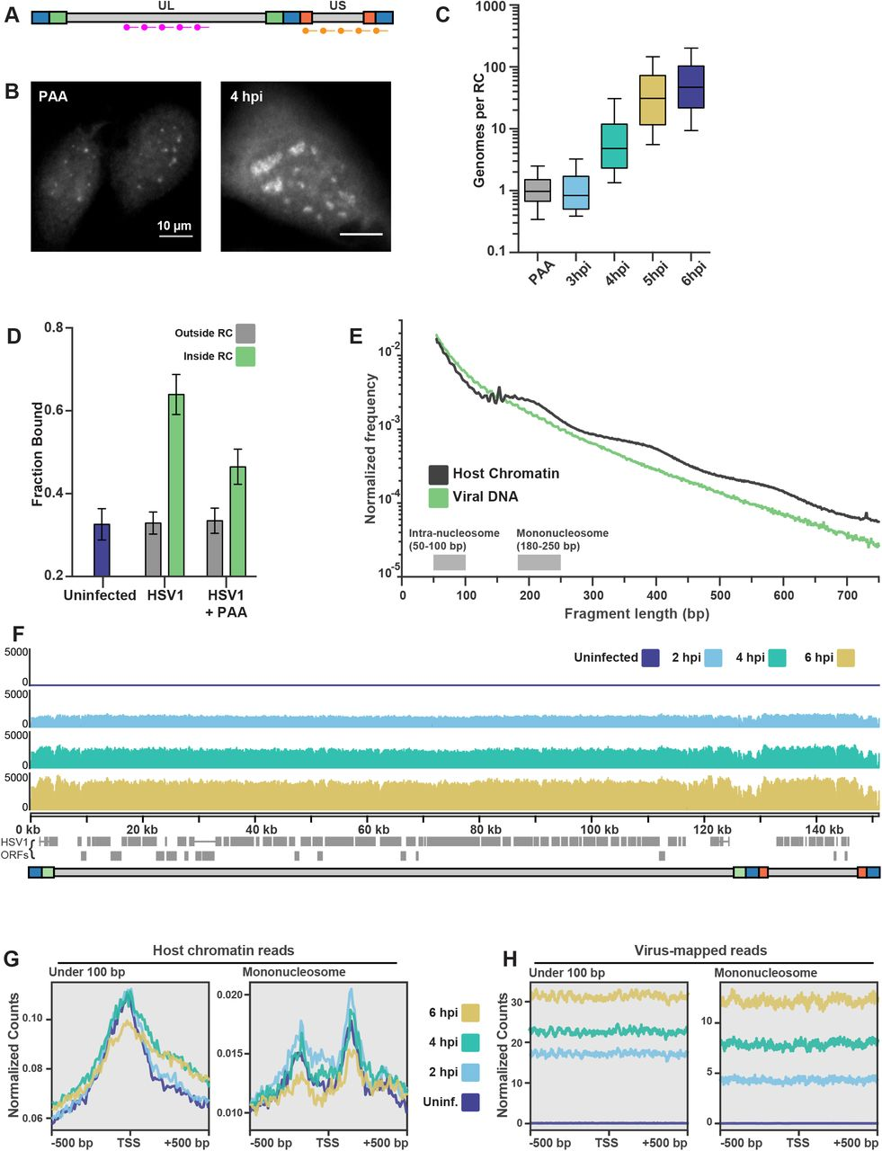 Transient DNA Binding Induces RNA Polymerase II