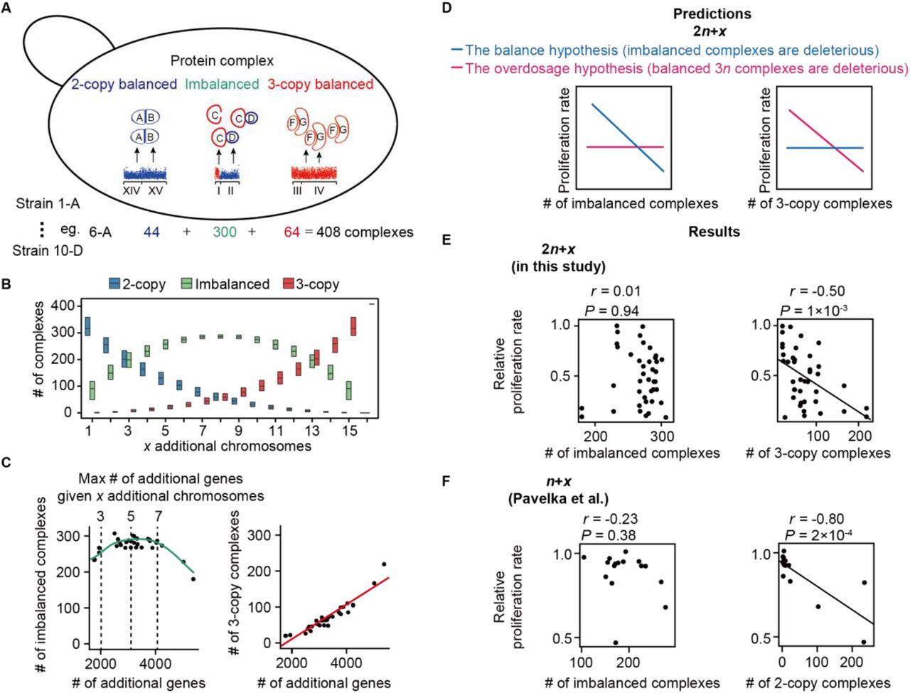 Overdosage of balanced protein complexes reduces proliferation rate