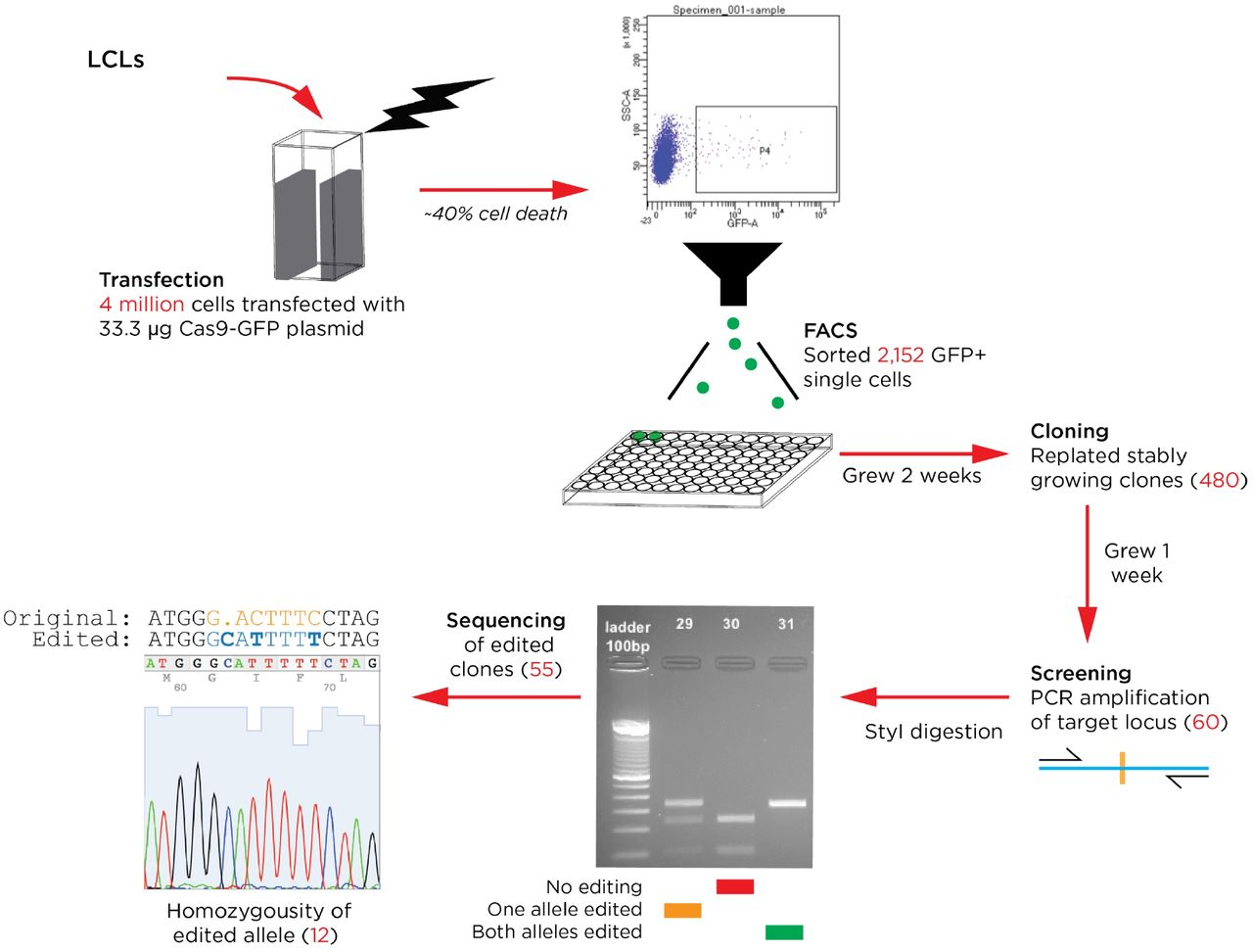 crispr/cas9-mediated genome editing of epstein-barr virus in human cells