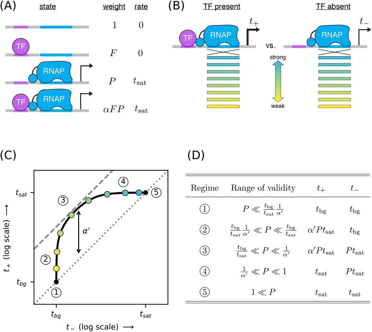 Precision measurement of cisregulatory energetics in living