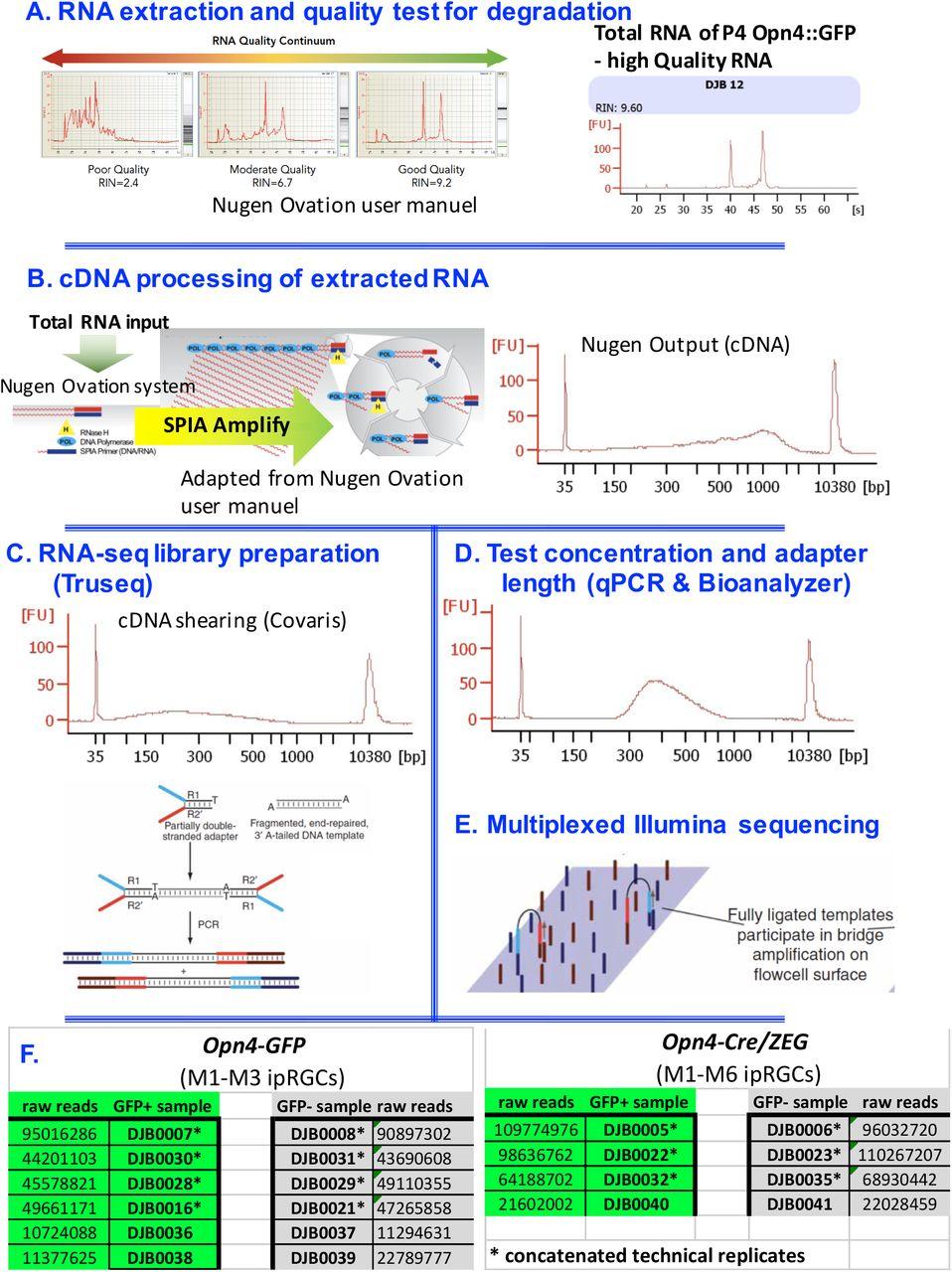 Molecular Diversity of Intrinsically Photosensitive Ganglion Cells