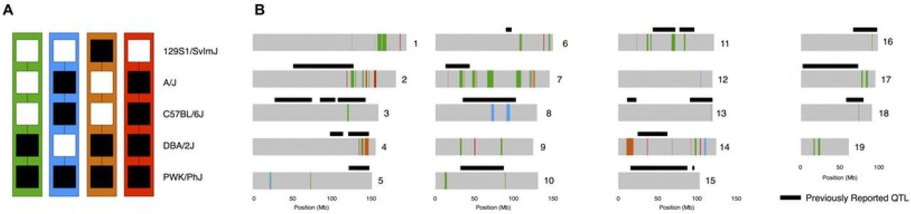 Age and genetic background determine hybrid male sterility