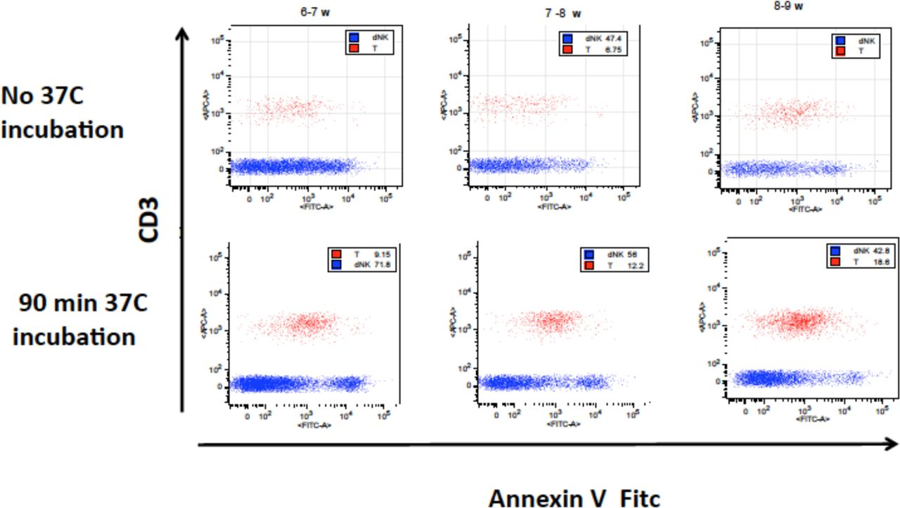 Corrigendum to: T cell apoptosis at the maternal-fetal interface in