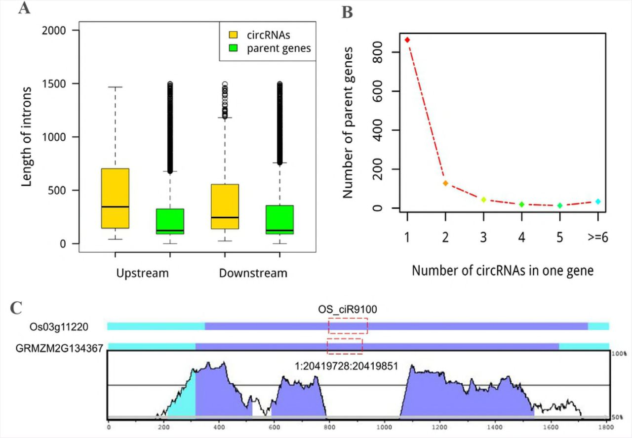 Genome-wide identification and functional analysis of