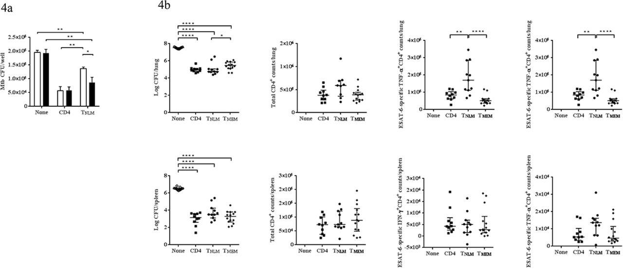 Mycobacteria-specific CD4+IFN-γ+ cell expresses naïve