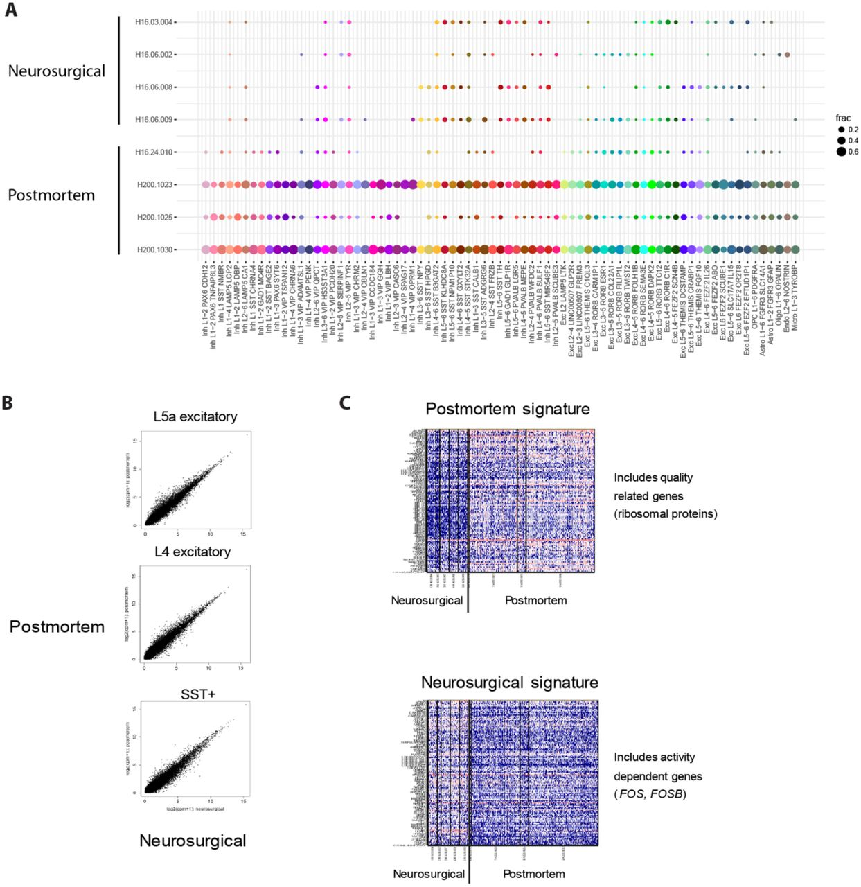 Conserved cell types with divergent features between human