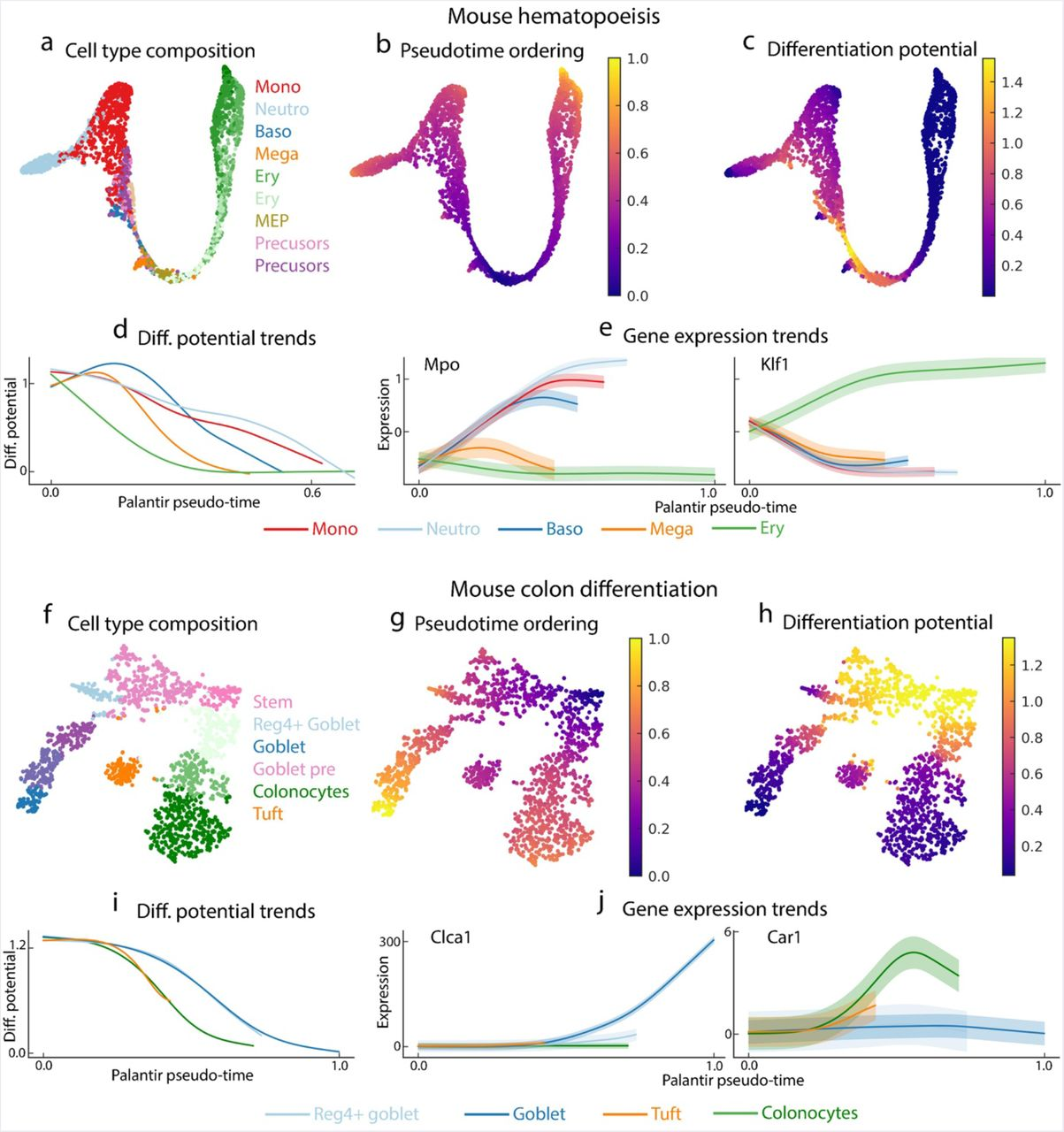 Palantir characterizes cell fate continuities in human