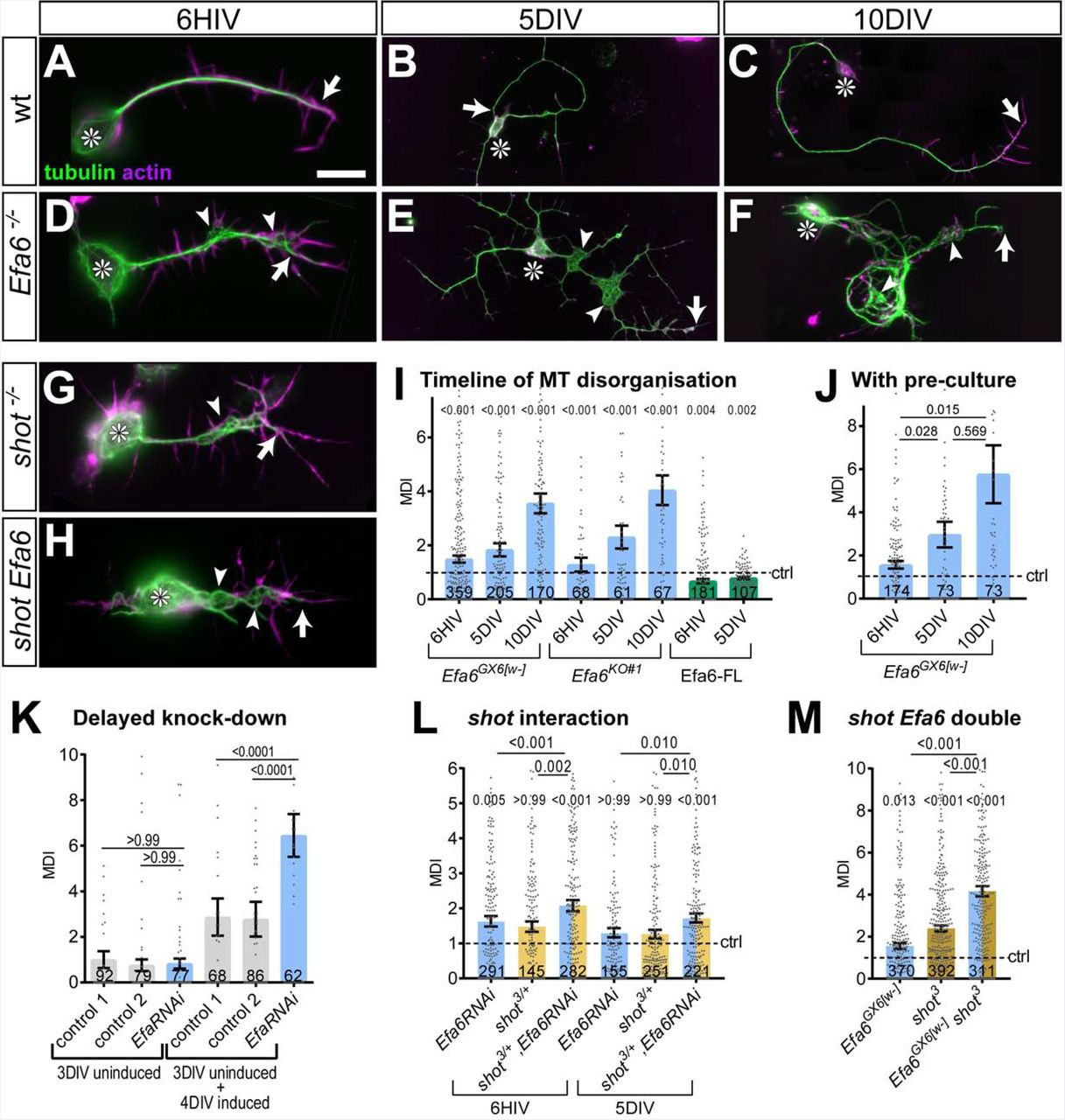 Efa6 regulates axon growth, branching and maintenance by eliminating