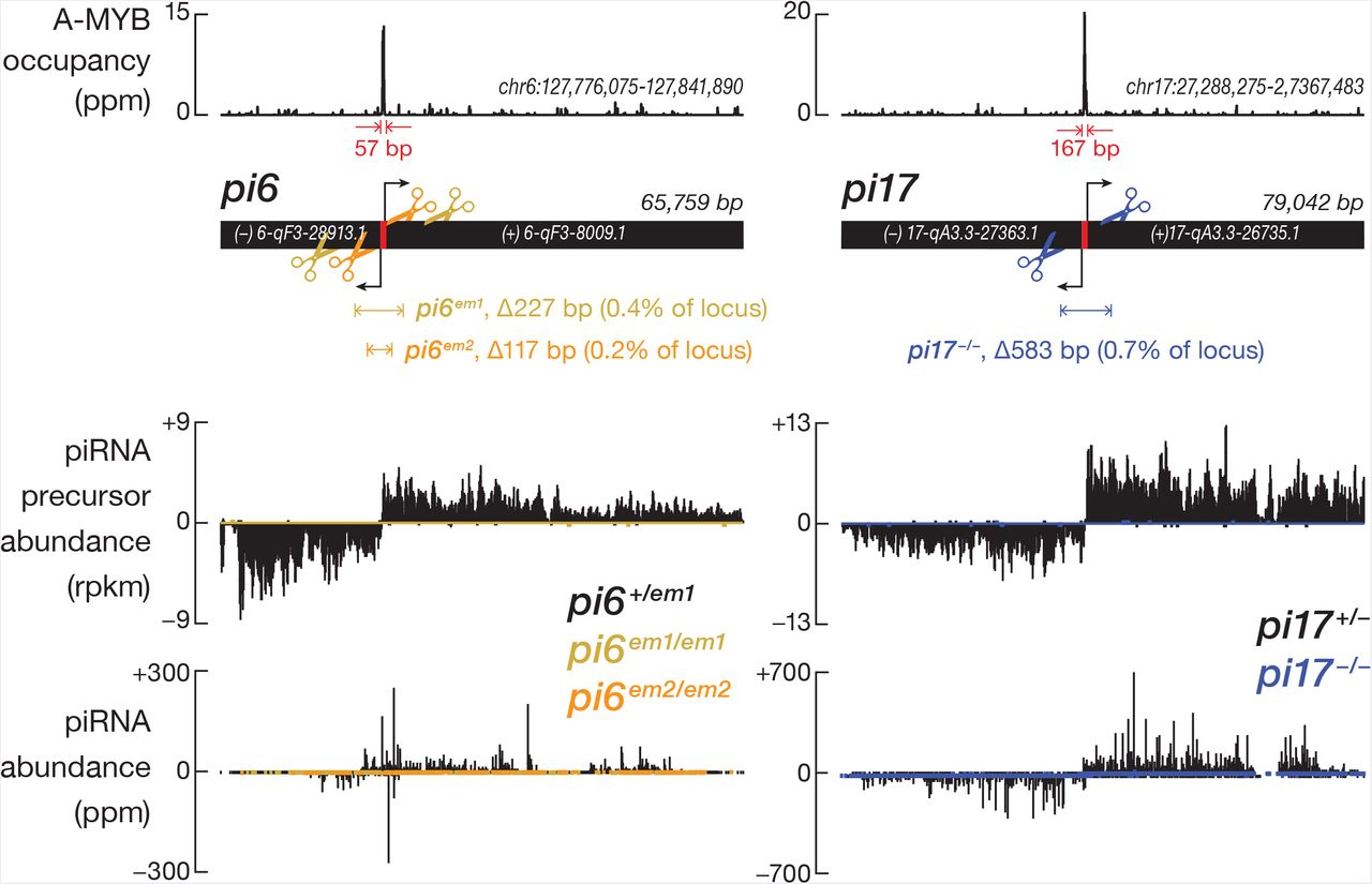 An Evolutionarily Conserved piRNA-producing Locus Required