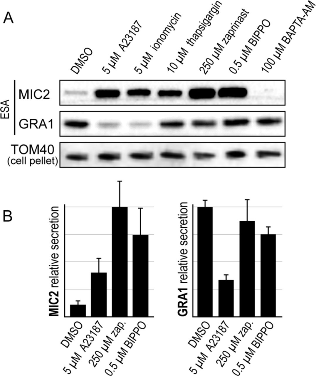 Calcium negatively regulates secretion from dense granules in
