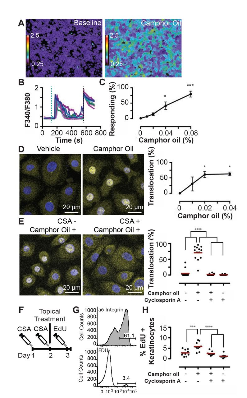 Camphor white oil induces tumor regression through cytotoxic T cell