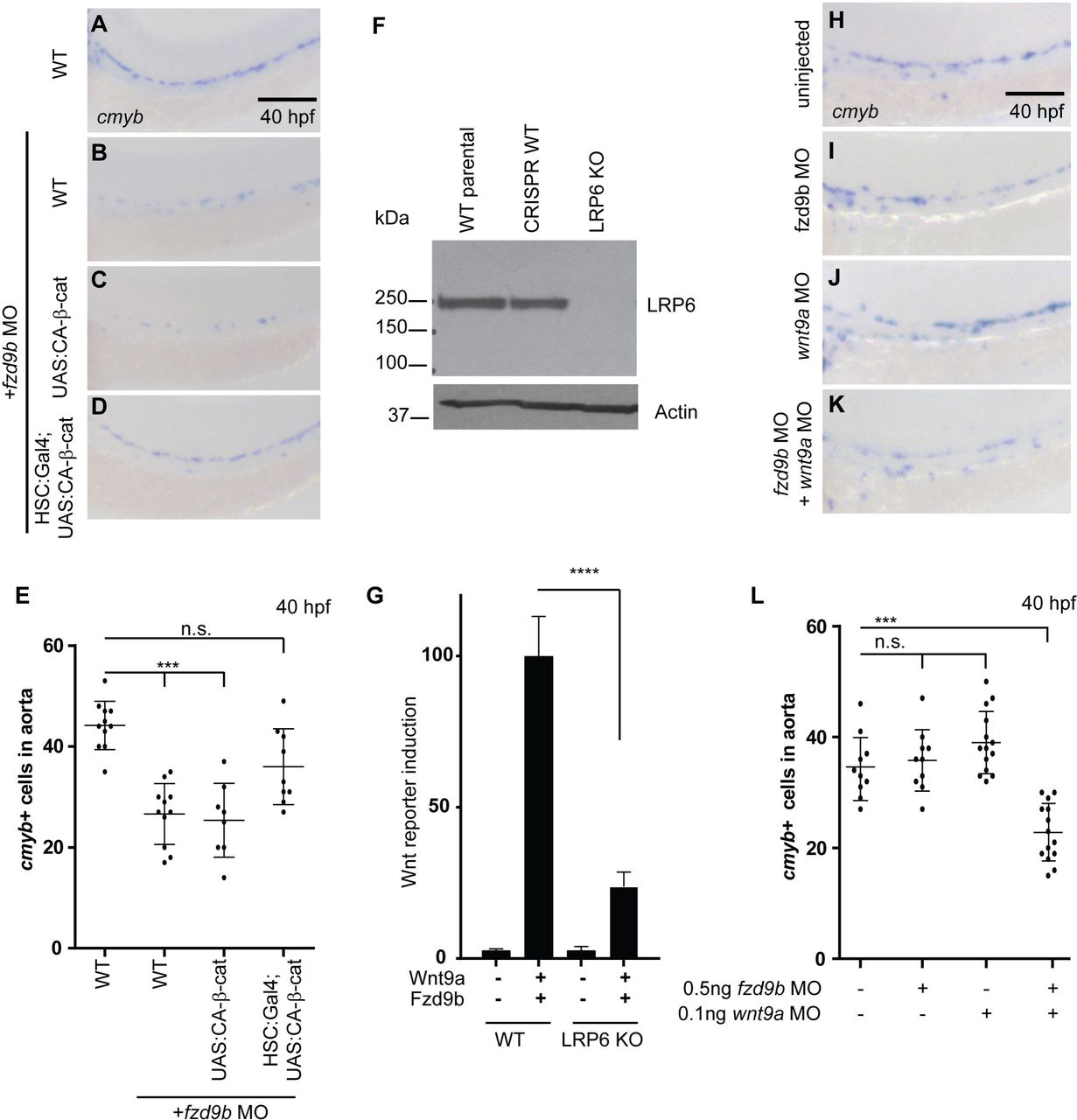 EGFR confers exquisite specificity of Wnt9a-Fzd9b signaling