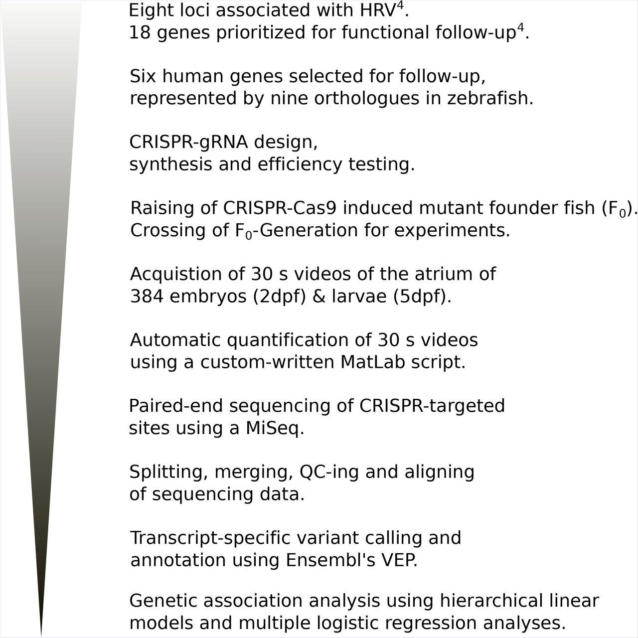 Translating GWAS-identified loci for cardiac rhythm and rate using