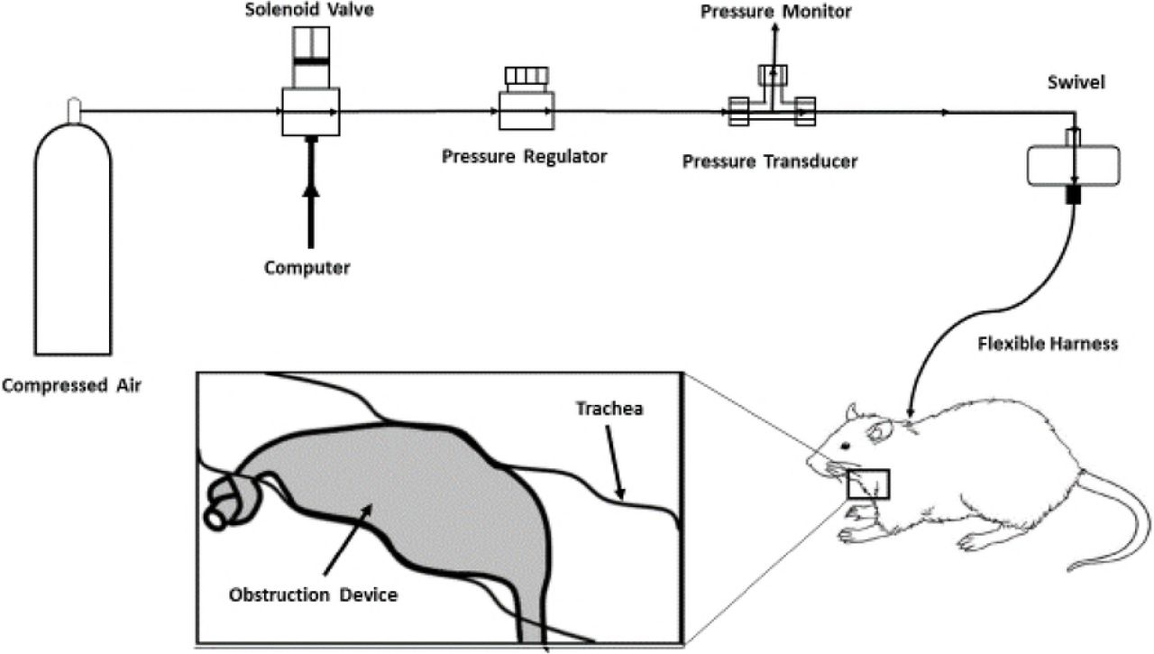 Identification of dysregulation of atrial proteins in rats