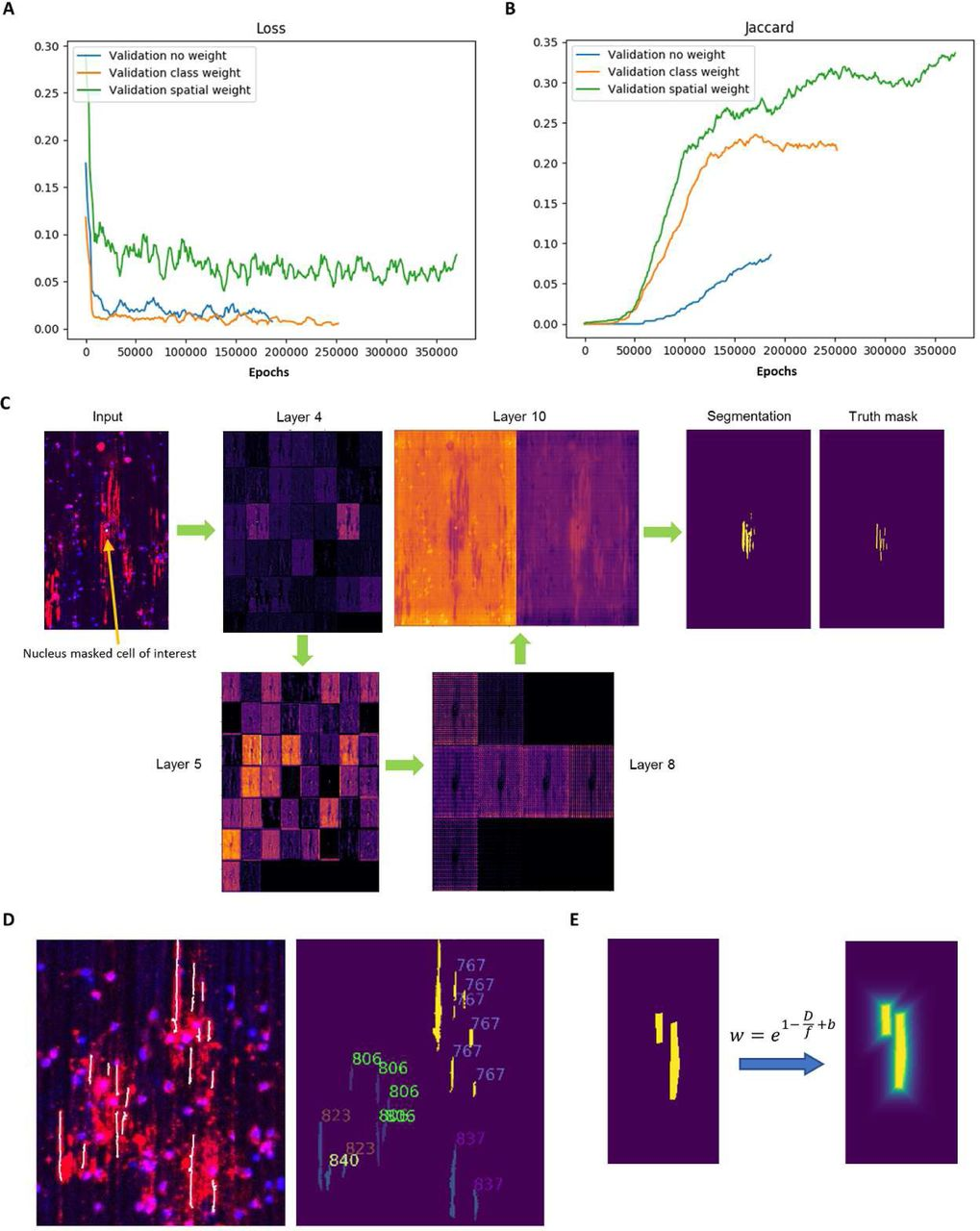 Deep learning for high-throughput quantification of