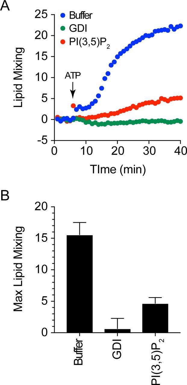 Phosphatidylinositol 3,5-Bisphosphate Regulates Yeast