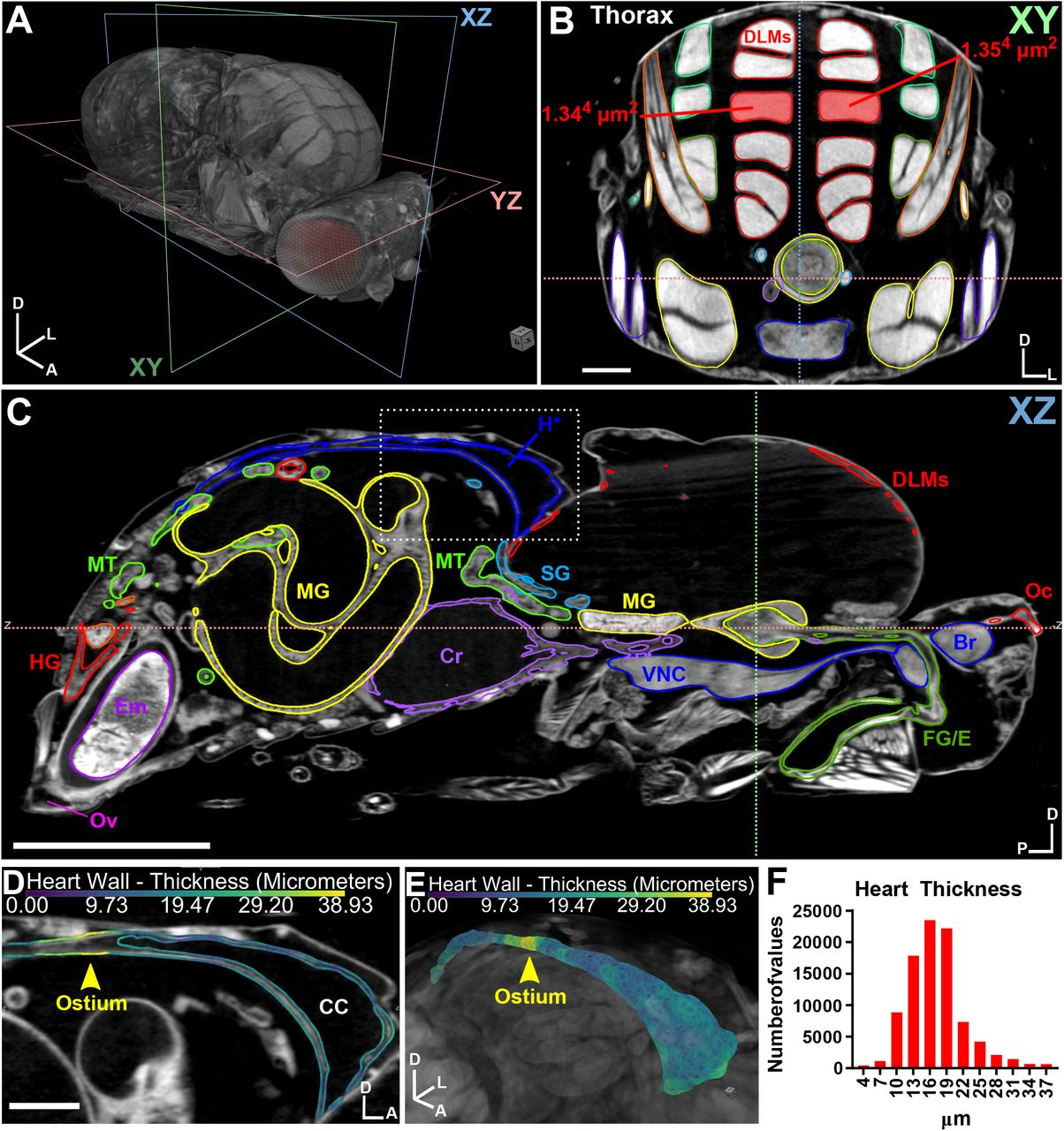 Micro Computed Tomography as an Accessible Imaging Platform