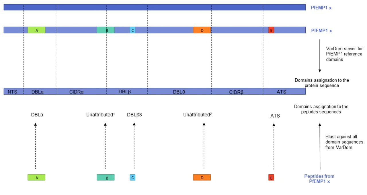 Genomic from Plasmodium falciparum field isolates from Benin