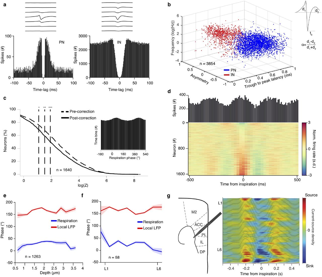 Breathing coordinates limbic network dynamics underlying