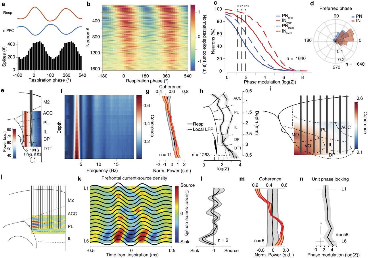 Breathing coordinates limbic network dynamics underlying memory