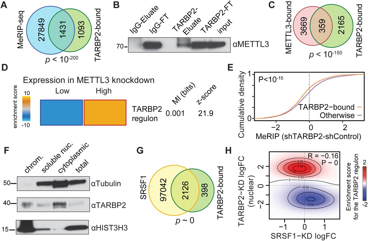 Nuclear TARBP2 drives oncogenic dysregulation of RNA