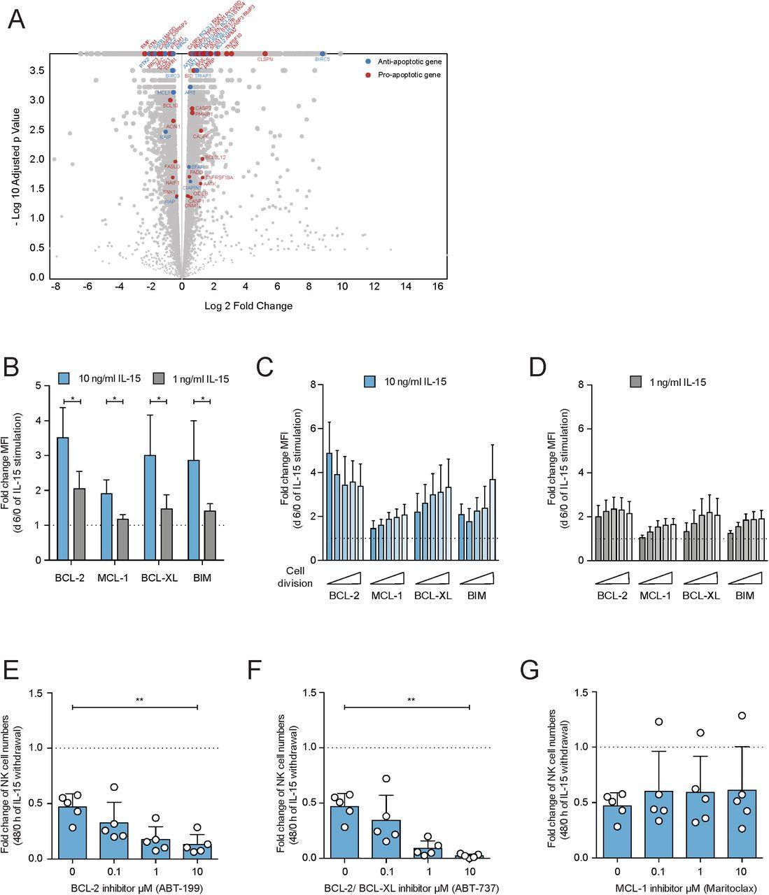 Induction of the BIMS Splice Variant Sensitizes Proliferating NK