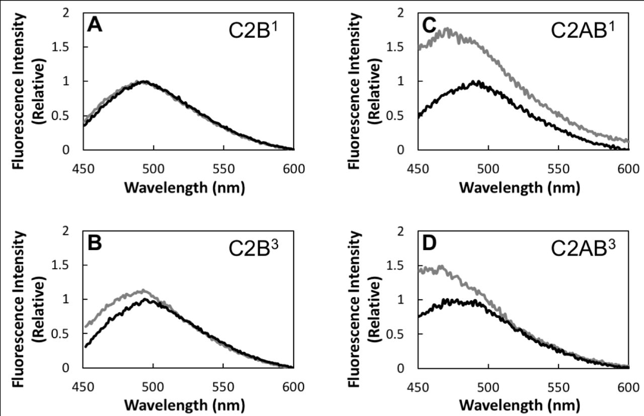 Cooperativity and Avidity in Membrane Binding by C2AB Tandem Domains