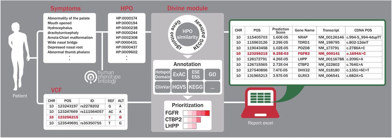 Divine: Prioritizing Genes for Rare Mendelian Disease in