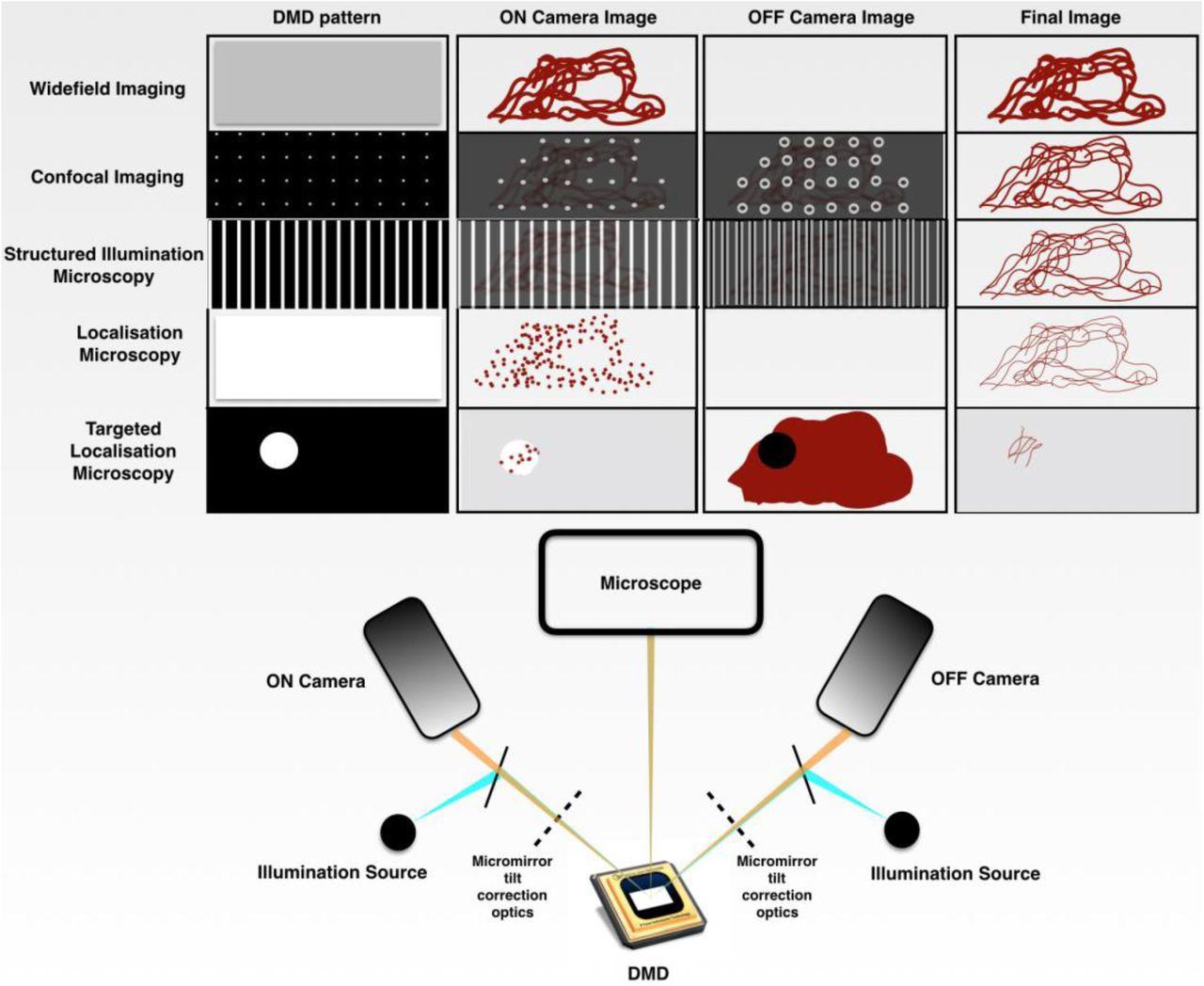 A Multimodal Adaptive Super-Resolution and Confocal Microscope | bioRxiv