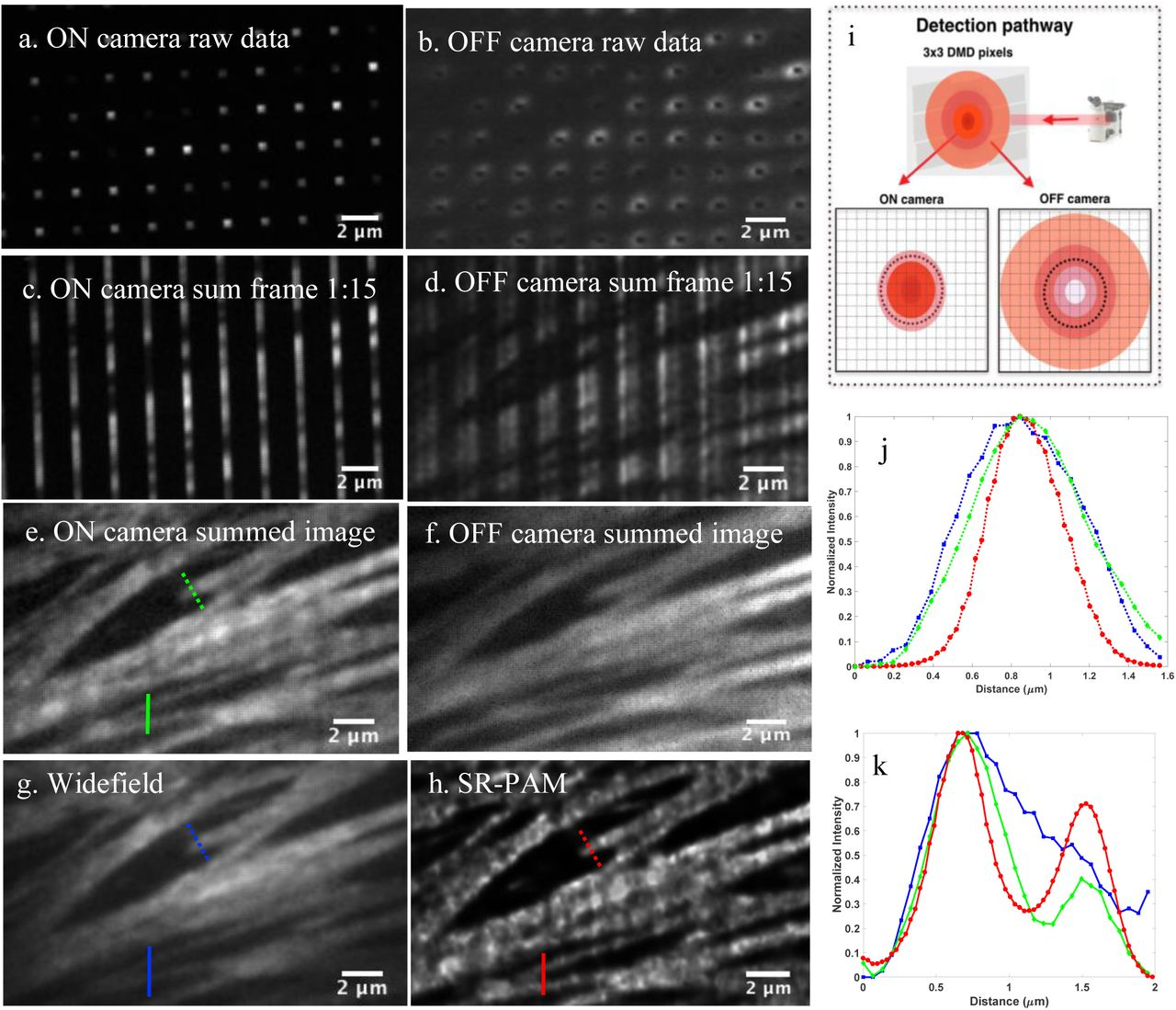A Multimodal Adaptive Super-Resolution and Confocal Microscope   bioRxiv