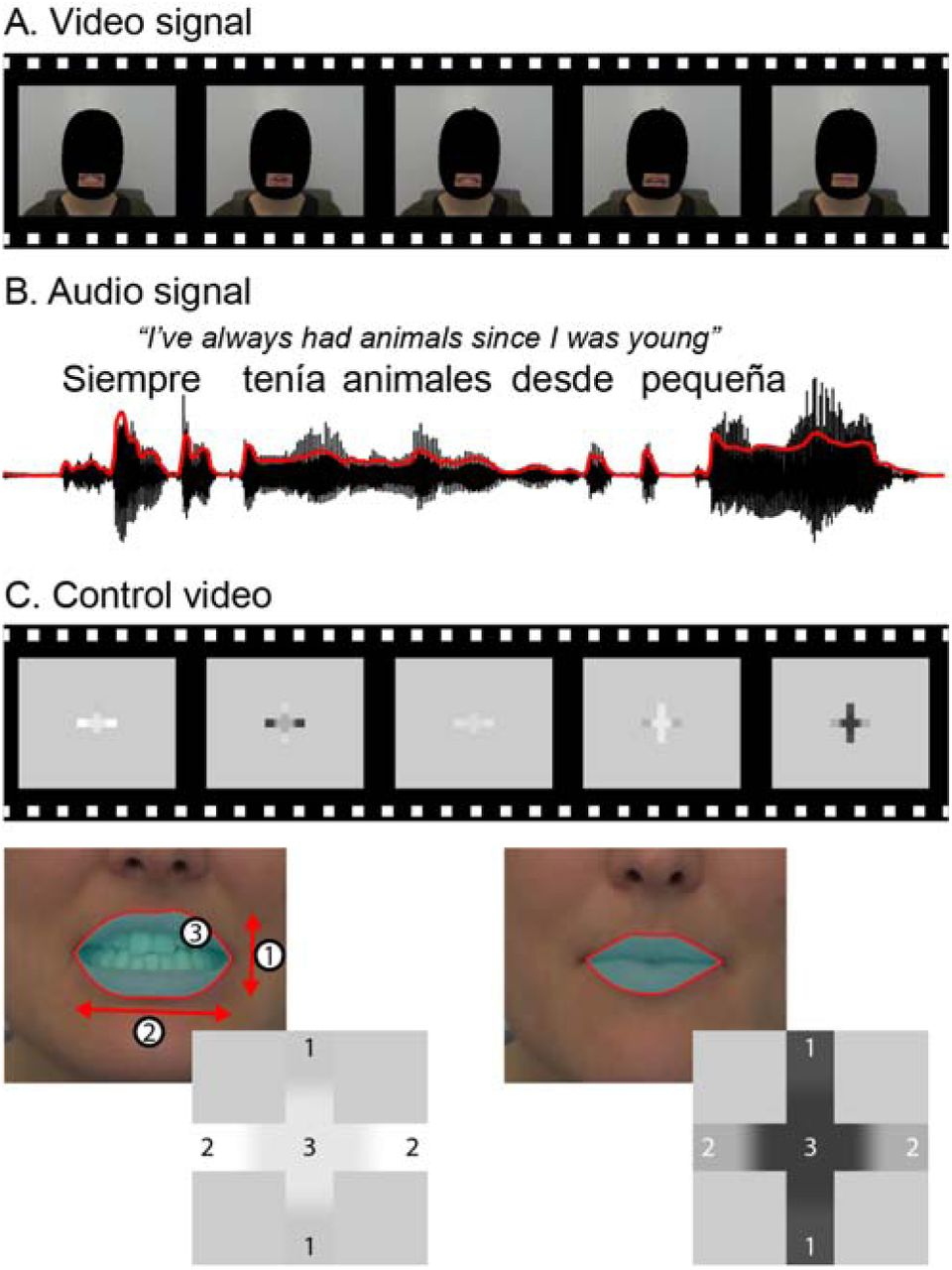 Hearing through lip-reading: the brain synthesizes features