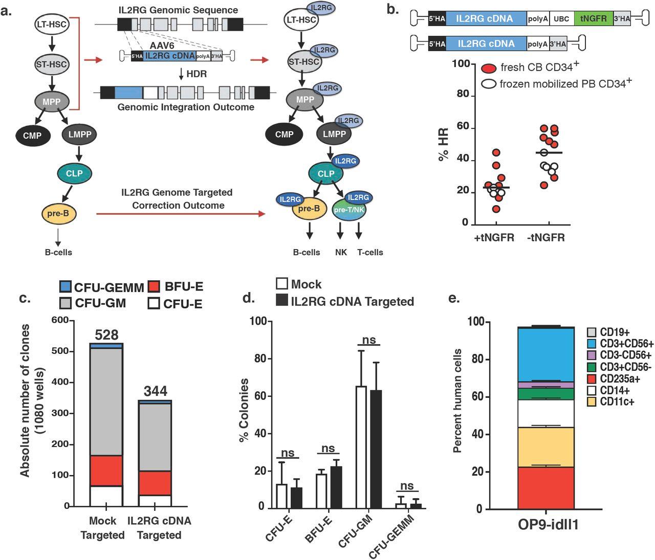 Gene Correction for SCID-X1 in Long-Term Hematopoietic Stem