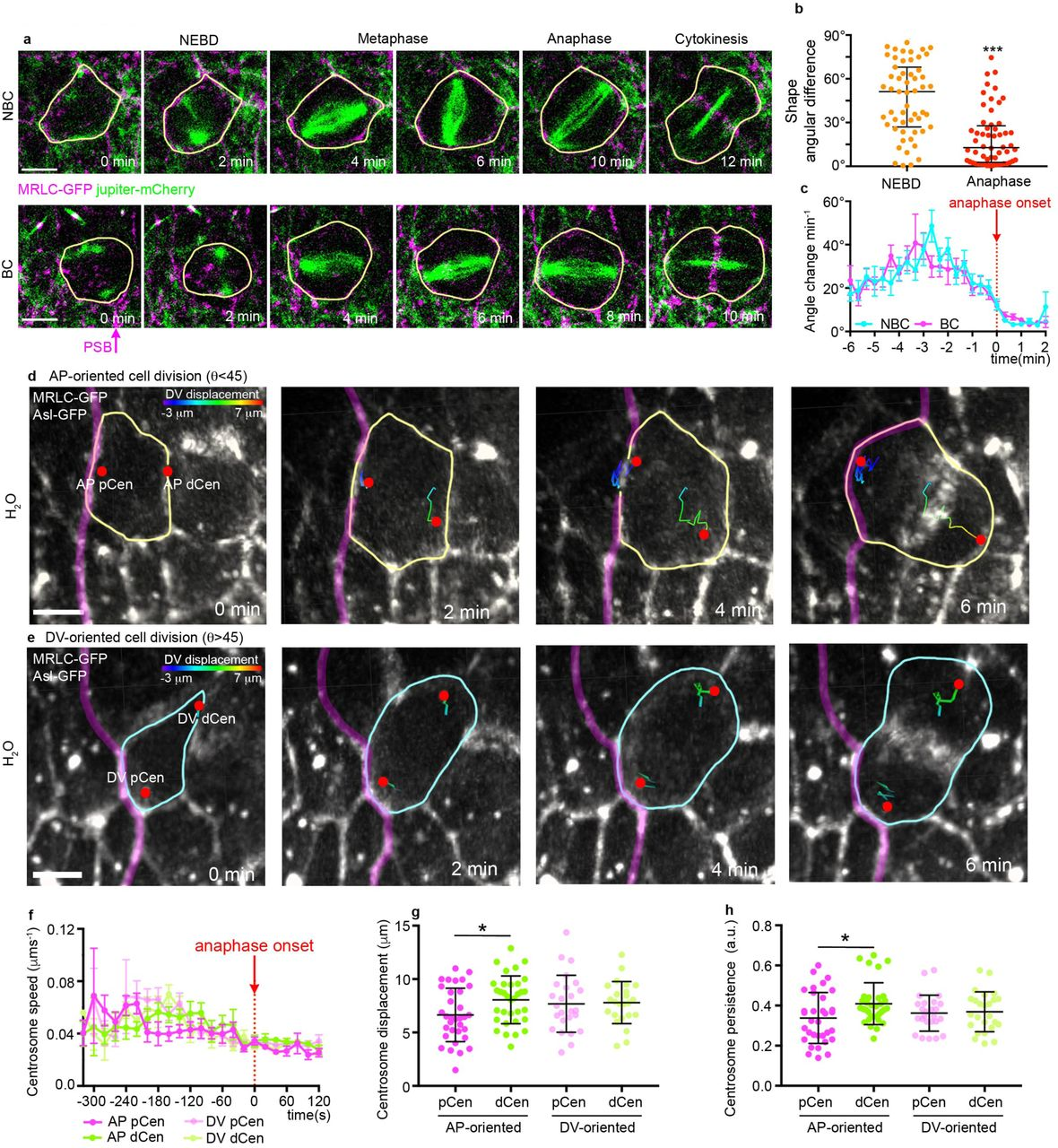 Actomyosin-driven tension at compartmental boundaries orients cell