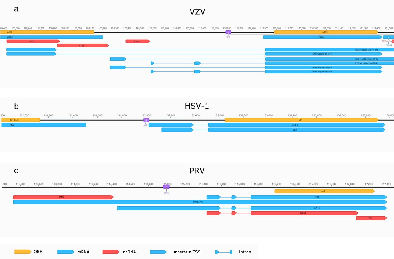 Long-read Sequencing Uncovers a Complex Transcriptome Topology in