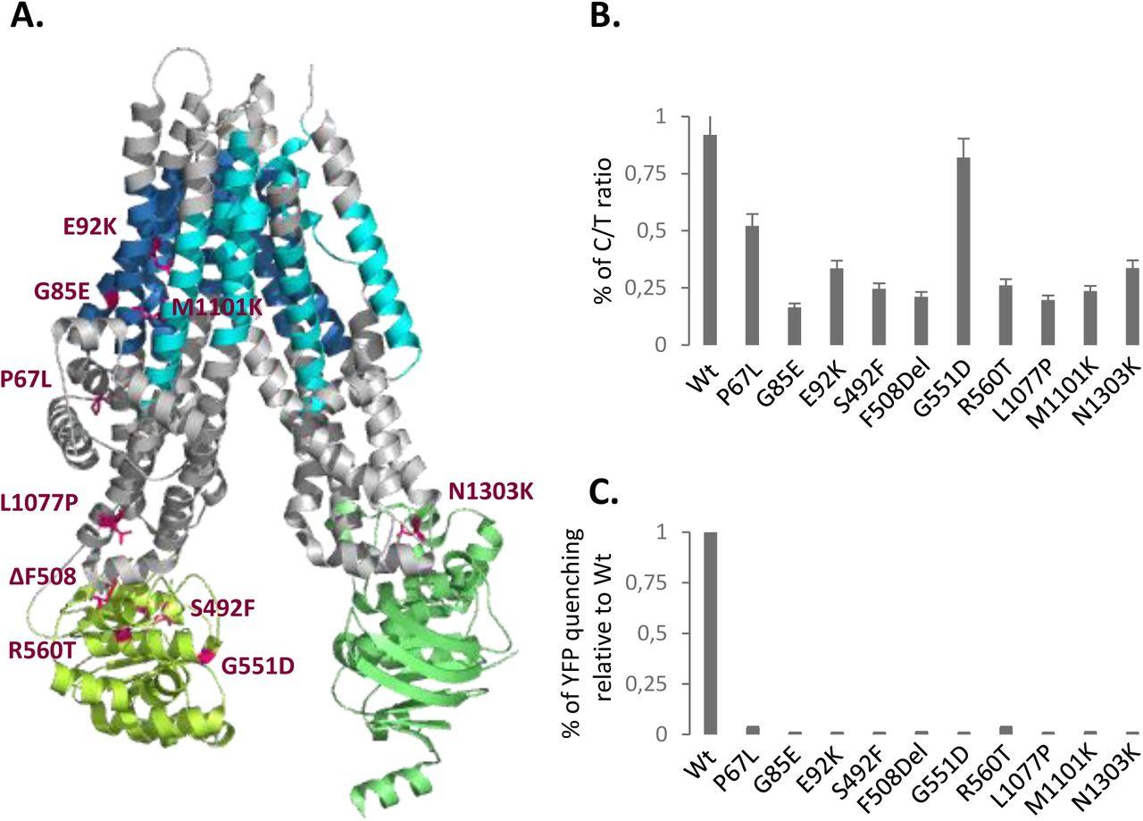 HDAC Inhibitors Rescue Multiple Disease-Causing CFTR Variants | bioRxiv