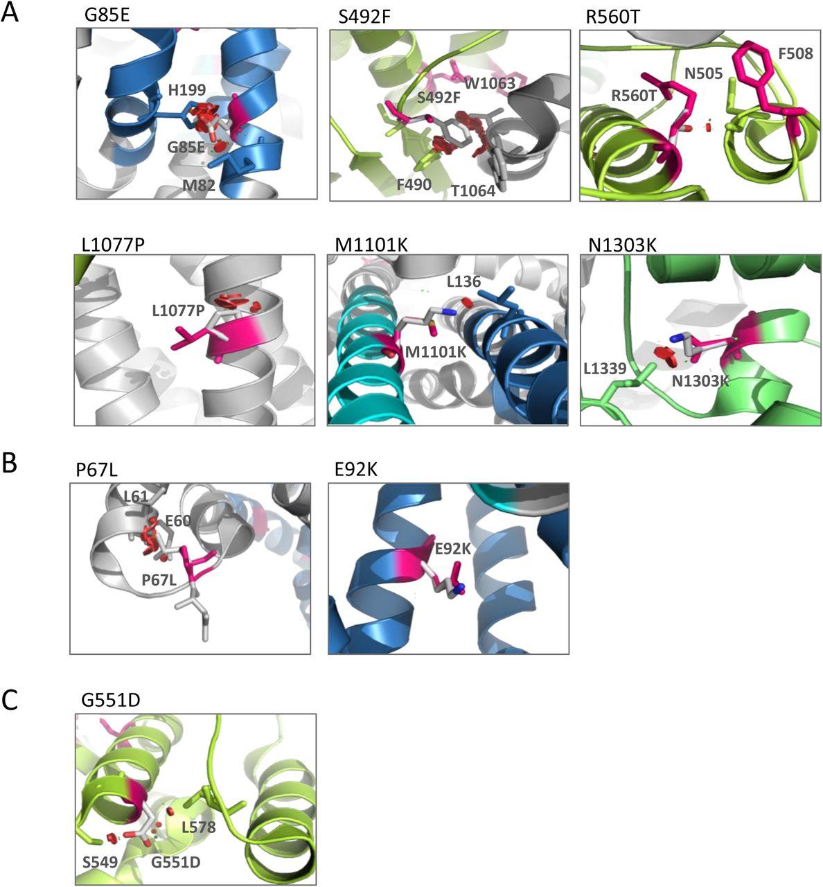 HDAC Inhibitors Rescue Multiple Disease-Causing CFTR Variants   bioRxiv
