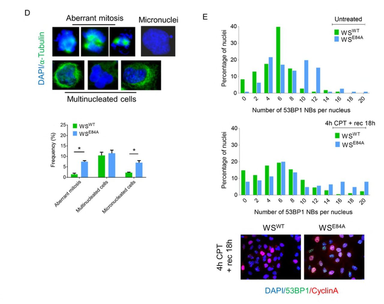 Rad51 and Mitotic Function of Mus81 are Essential for