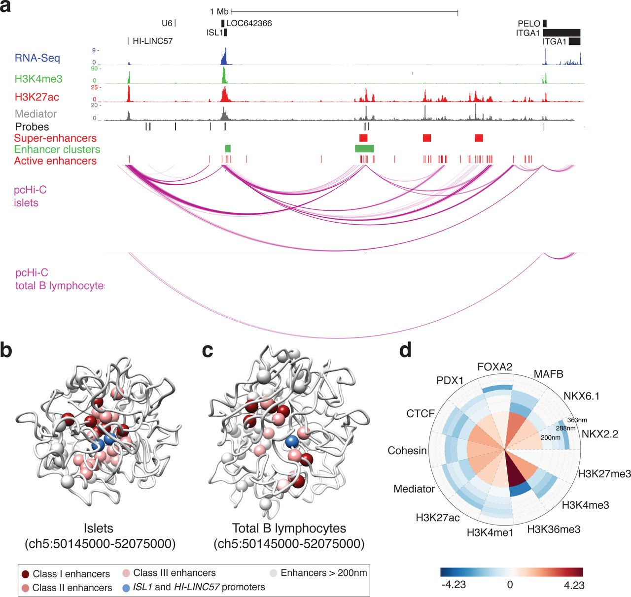 Human pancreatic islet 3D chromatin architecture provides insights