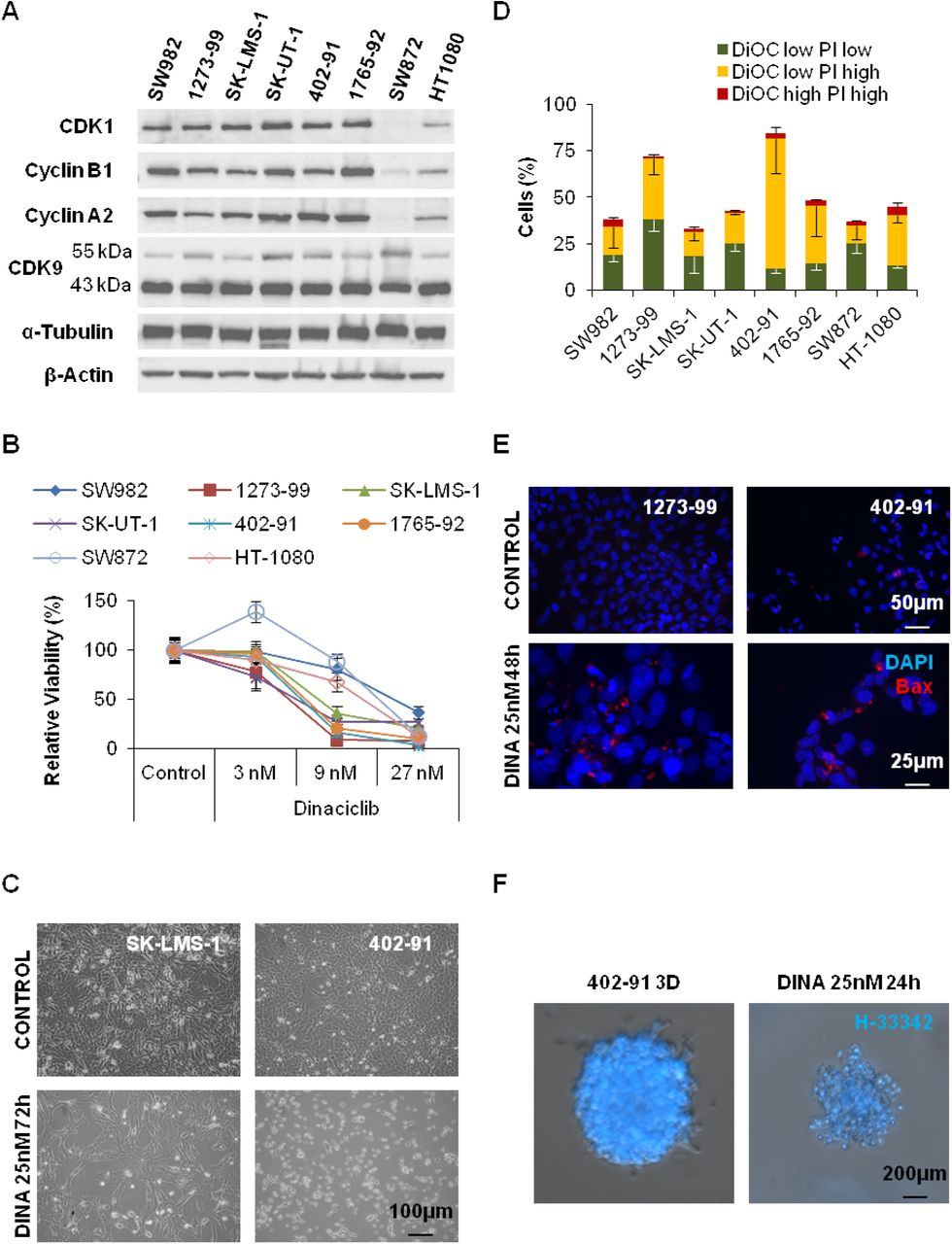 Bcl-xL inhibition enhances Dinaciclib-induced cell death in