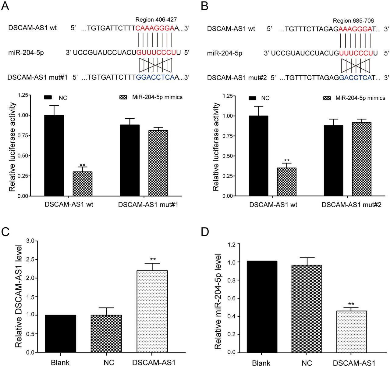 DSCAM-AS1 promotes tumor growth of breast cancer by reducing miR-204