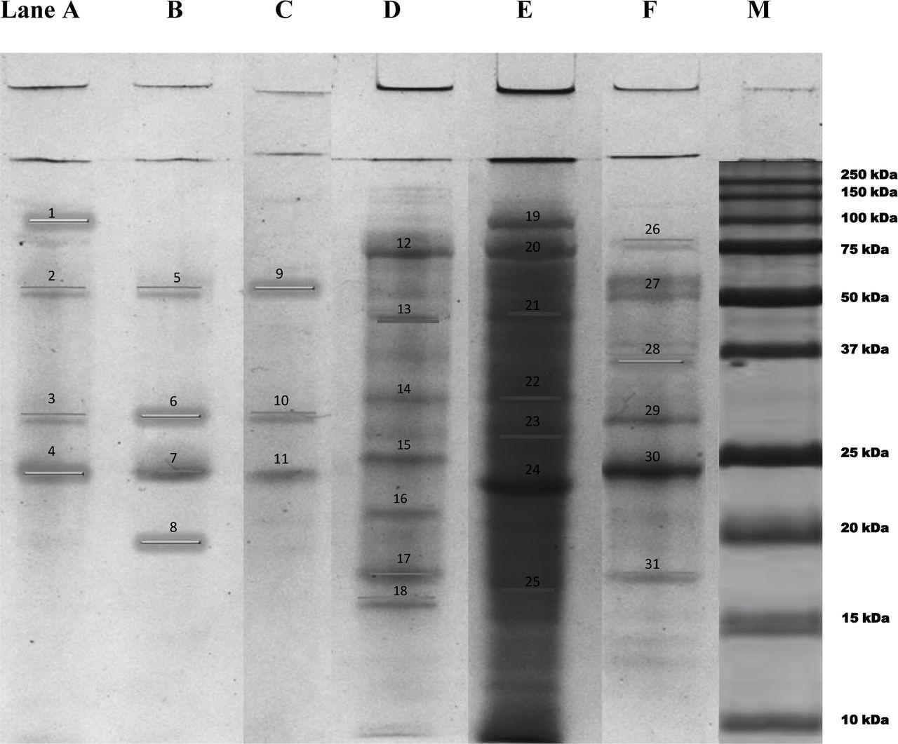 Description of novel marine bioflocculant-producing bacteria