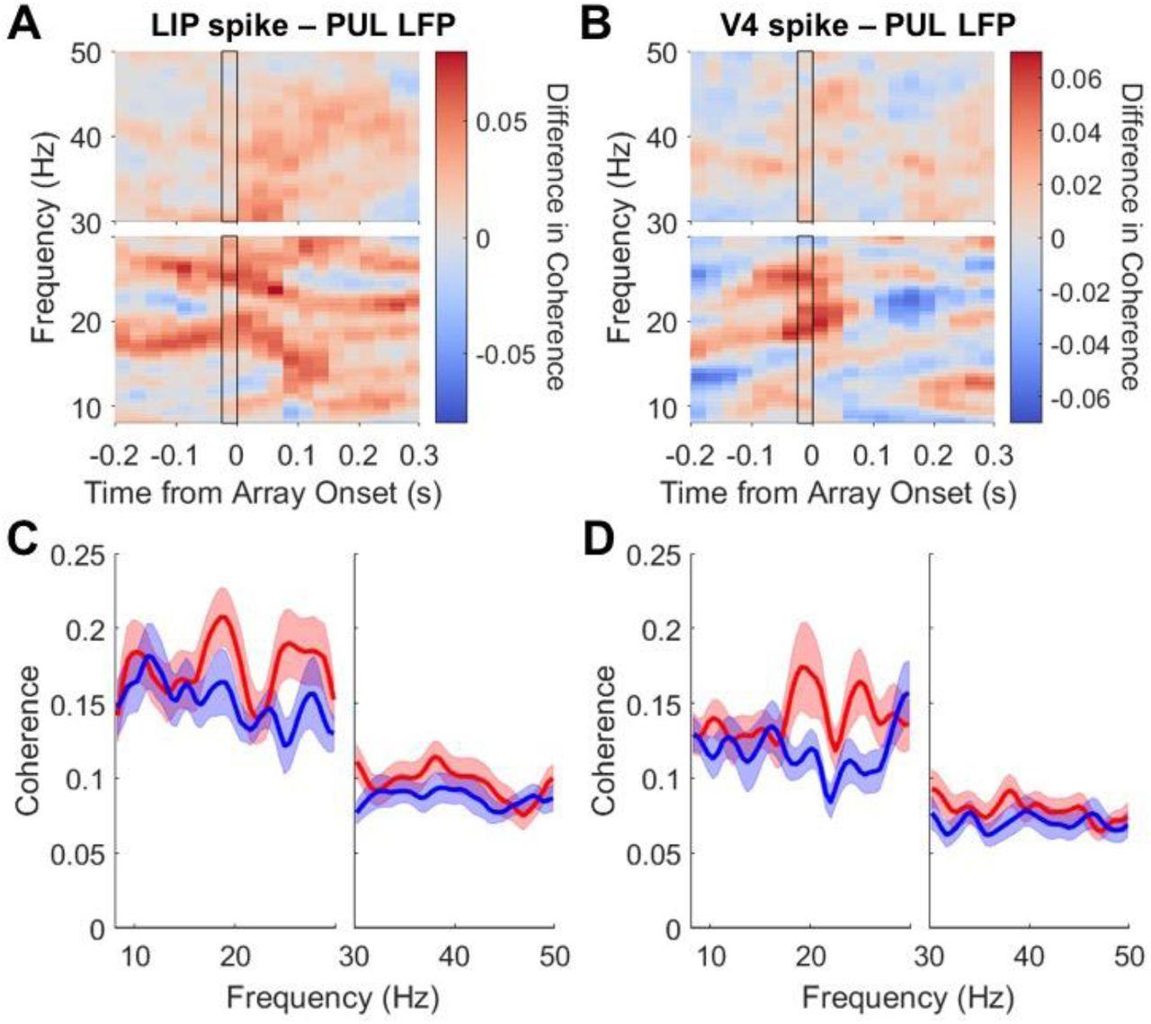 Pulvinar influences parietal delay activity and information