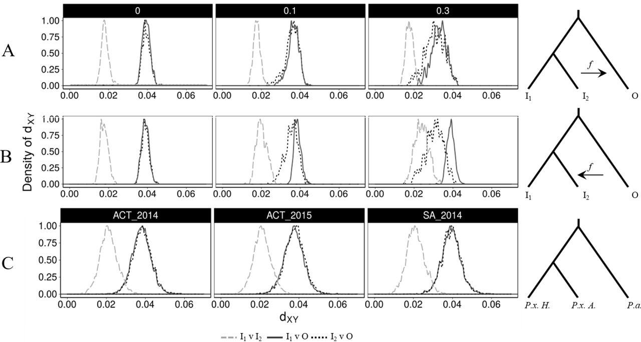Assessing genomic admixture between cryptic Plutella moth species