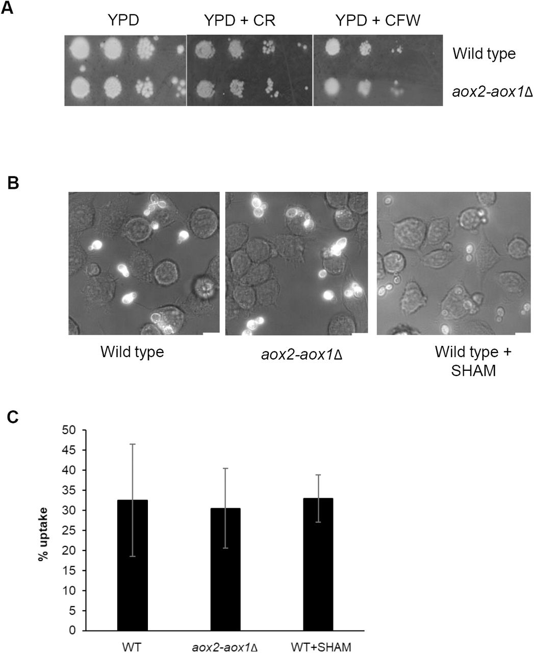 Alternative oxidase induction protects Candida albicans from