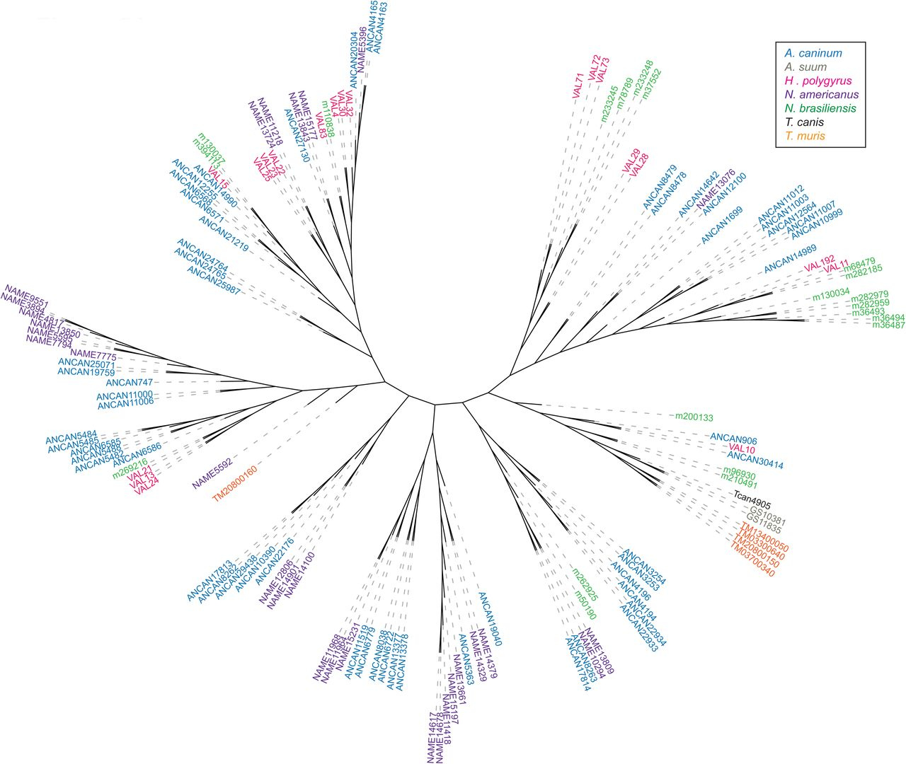 Comprehensive analysis of human hookworm secreted proteins using a