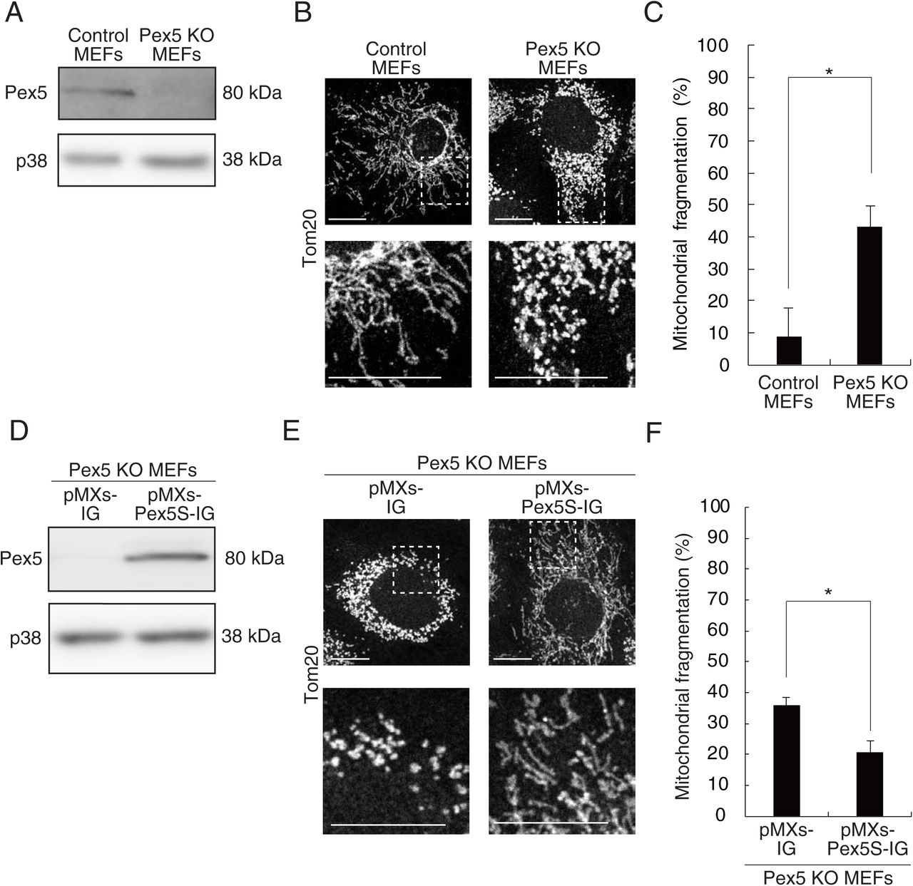 Peroxisomes control mitochondrial dynamics and the