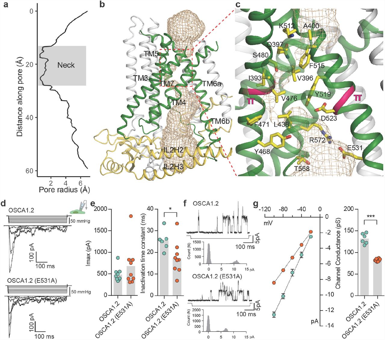 Cryo-EM structure of the mechanically activated ion channel