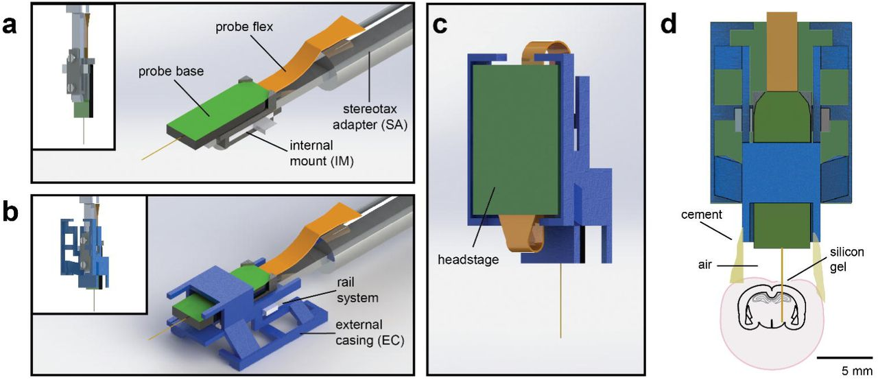 Chronically-implanted Neuropixels probes enable high yield